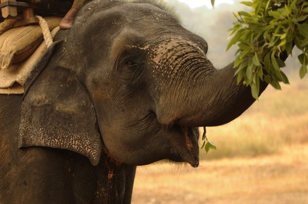 The Happiness Hypothesis - how to train your elephant